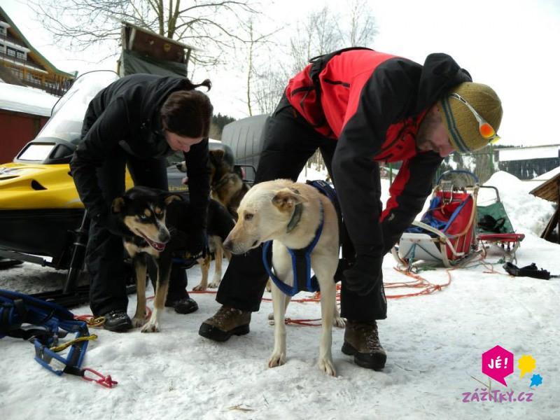 Skijöring - na běžkách taženi psy - poukaz na zážitek
