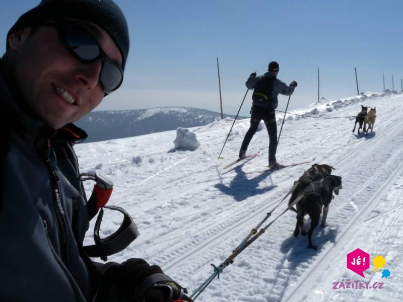 Skijöring - na běžkách taženi psy - dárkový poukaz
