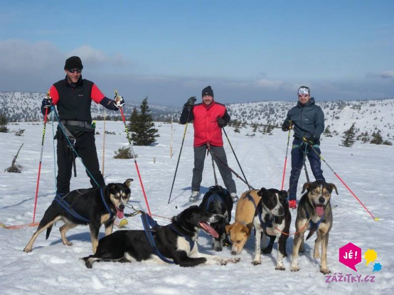 Skijöring - na běžkách taženi psy - dárek