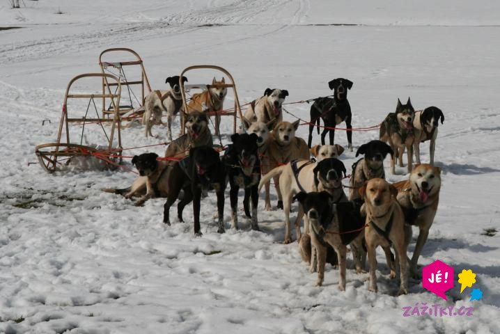 Vyjížďka se psím spřežením - certifikát