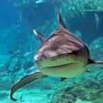 Potápění se žraloky - dárkový poukaz na zážitek