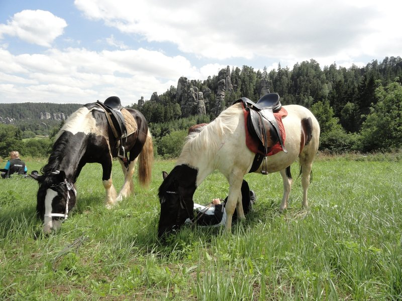 Vyjížďka na koni ve dvou - dárek